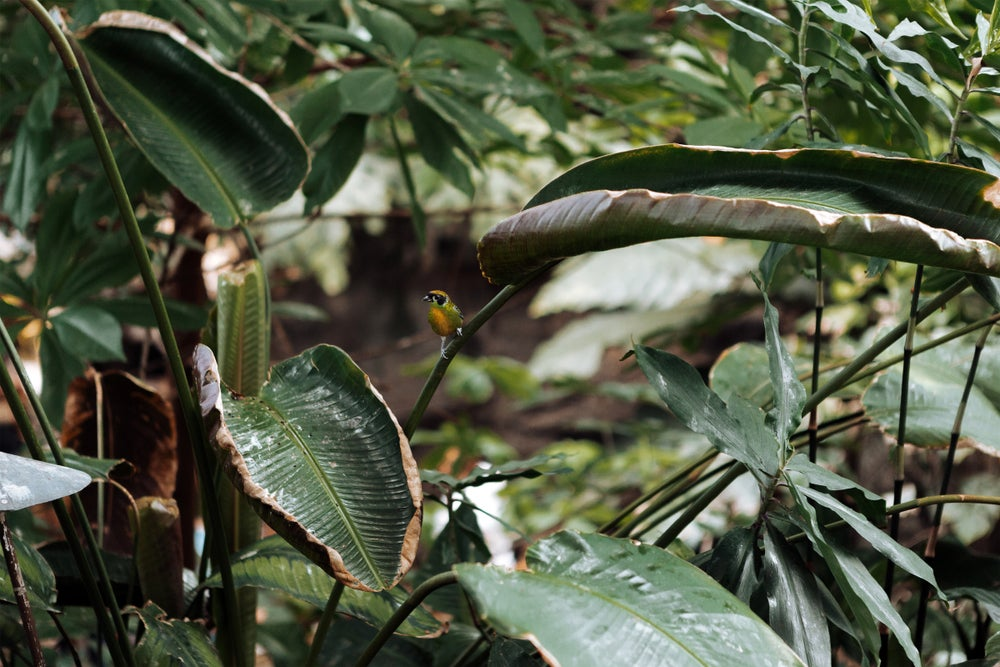 Image of Bird in the Jungle