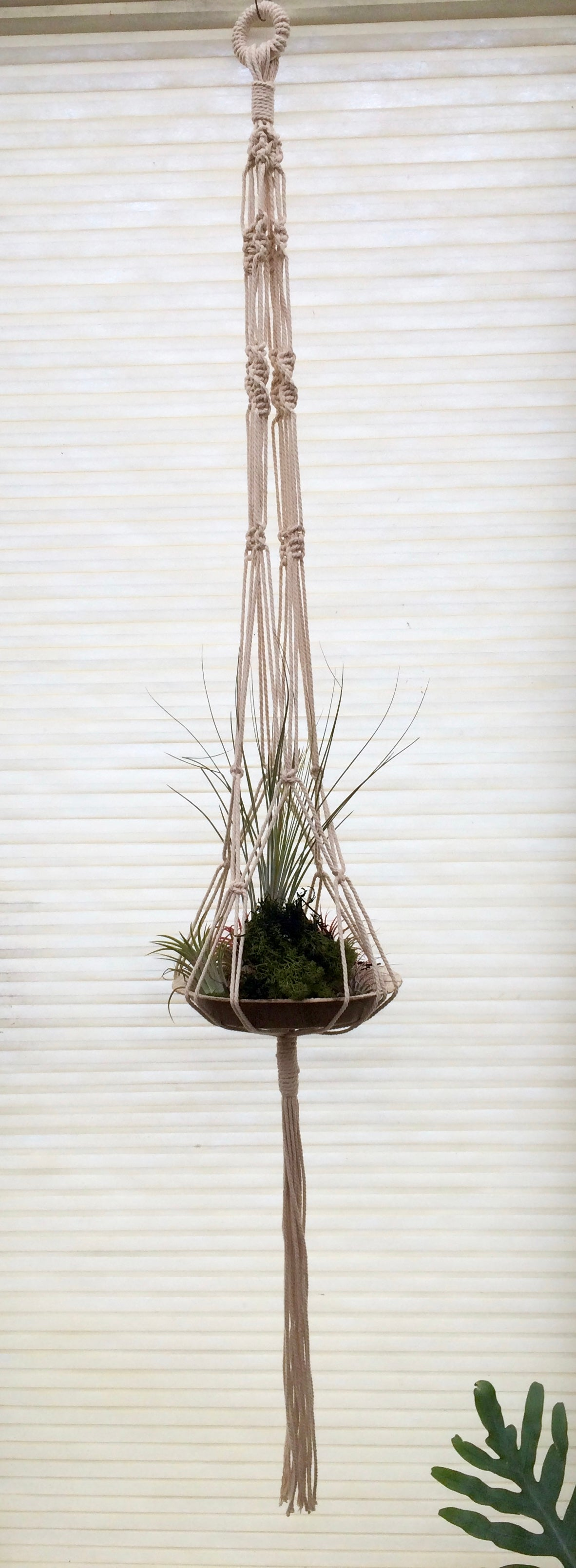 Image of Macrame air plant holder