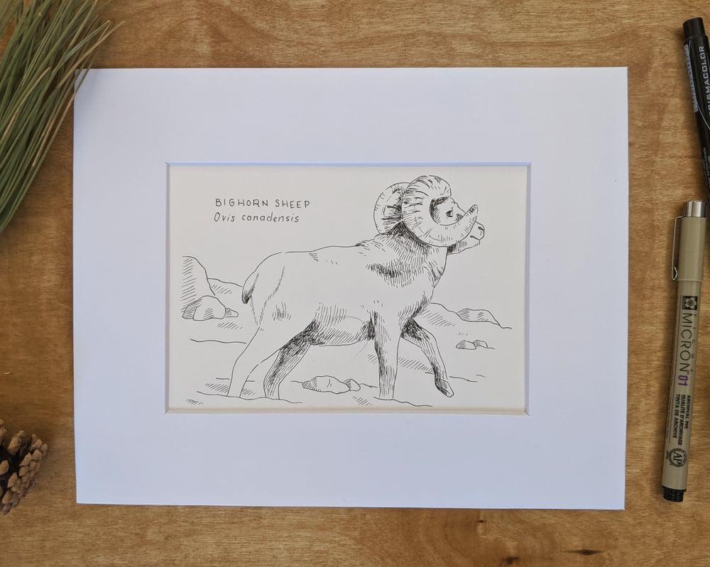 Image of North American Animal Drawings