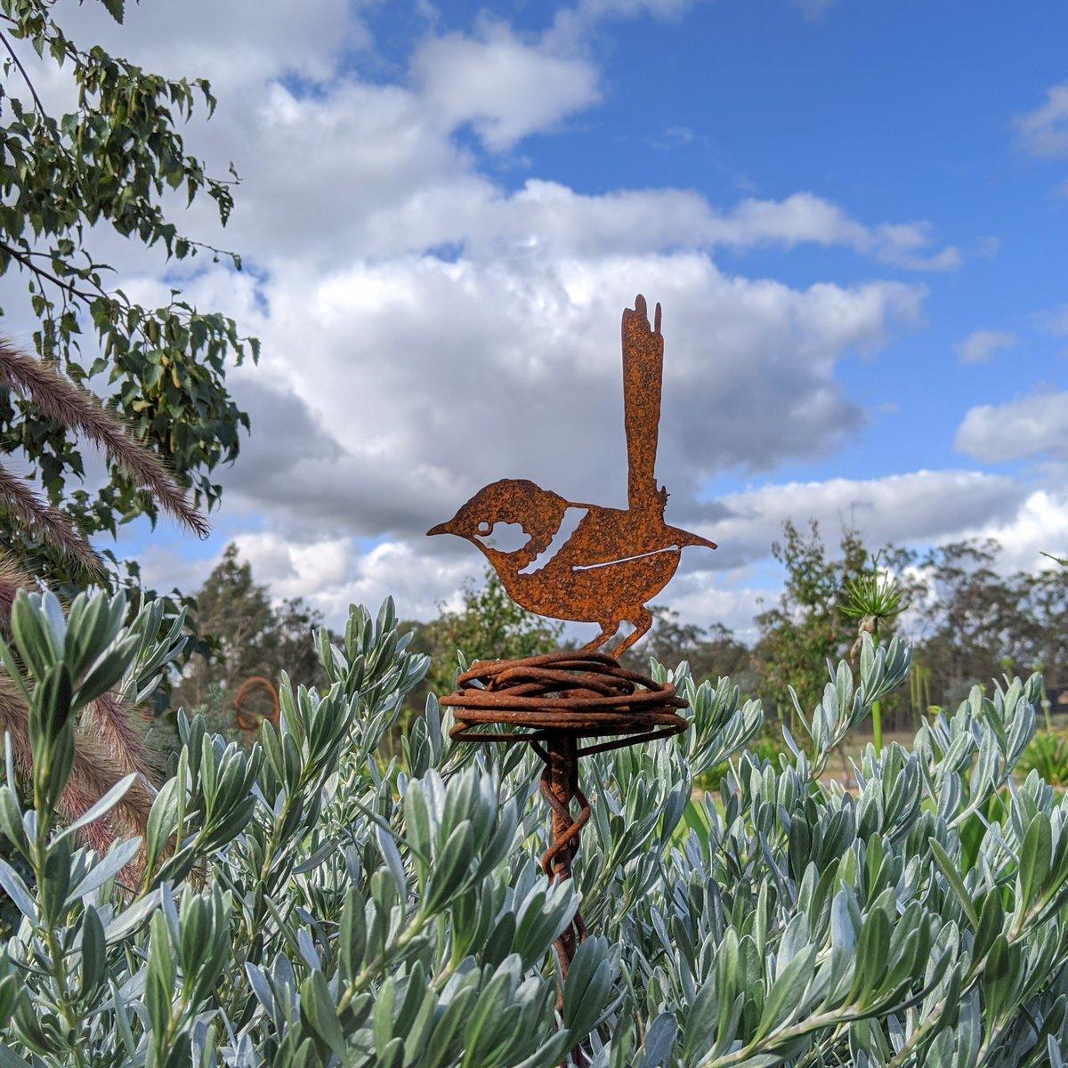 Wren in nest