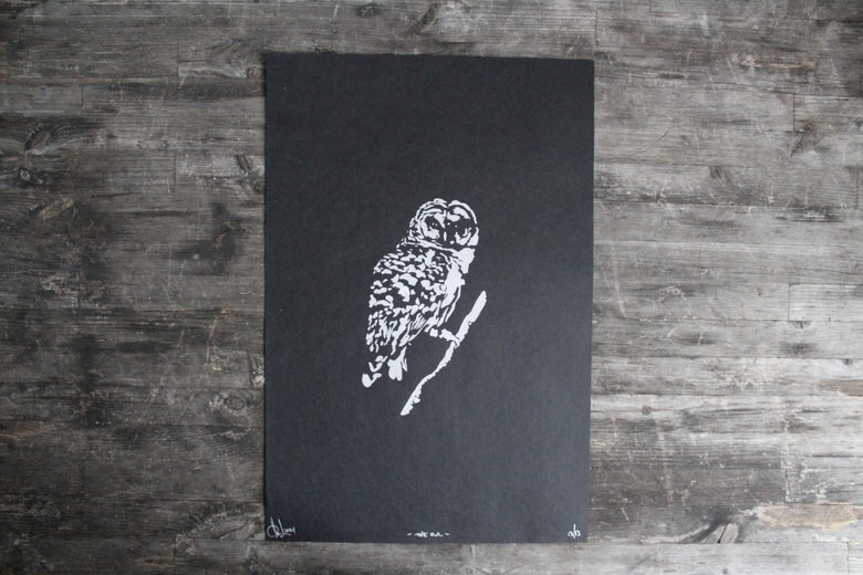 Image of The Owl