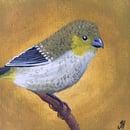 Image 4 of Small Tasmanian Bird Original Paintings
