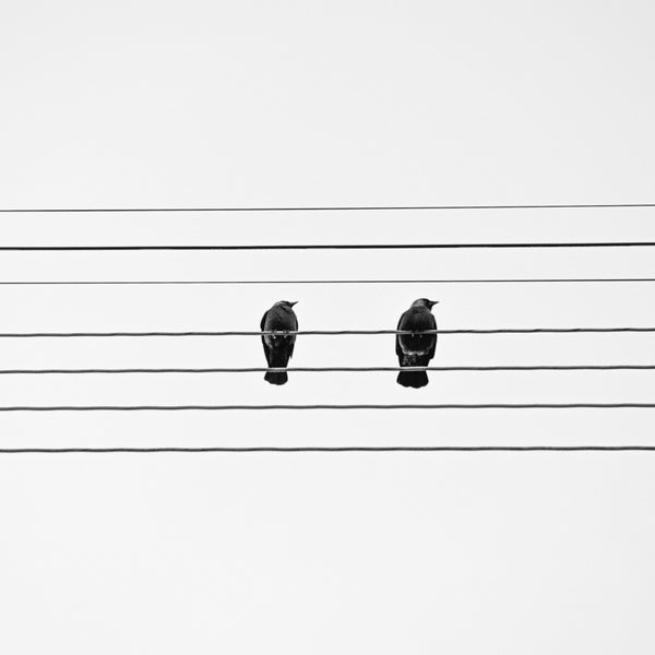 Image of Bird Song