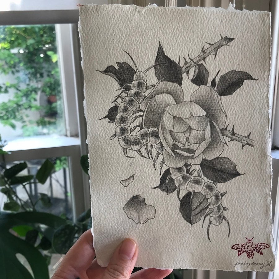 Image of Rose and centipede pencil drawing A5 original