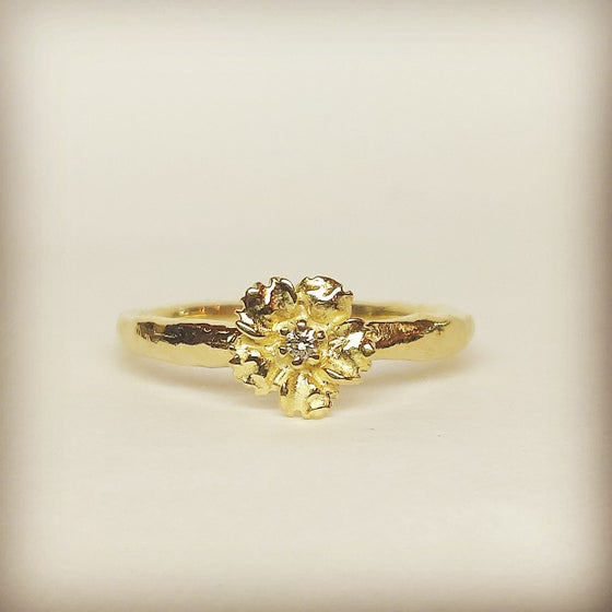 Beeld van Anemone diamond