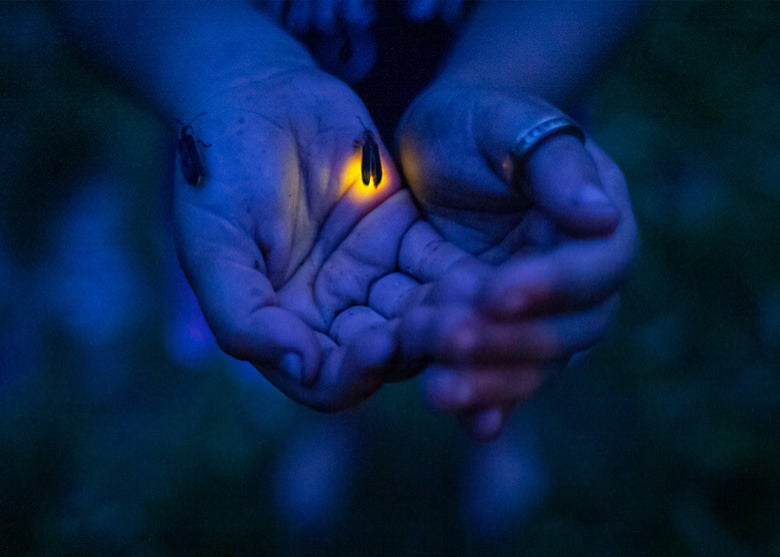 Image of Flint Fireflies, 2007