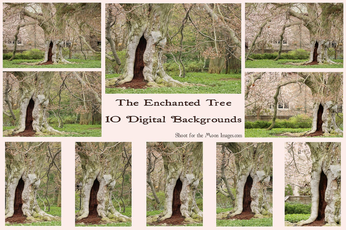 Image of The Enchanted Tree Digital Backgrounds