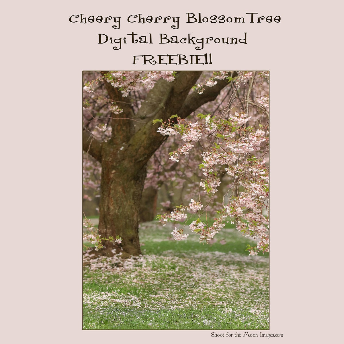 Image of Cheery Cherry Blossom Tree FREEBIE