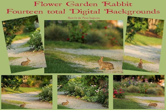 Image of Flower Garden Rabbit Digital Backgrounds