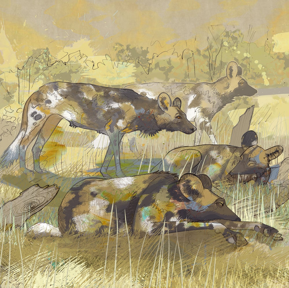 Image of Painted Dogs - South Luangwa - Zambia