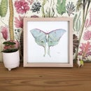 Image 1 of Framed Luna Moth