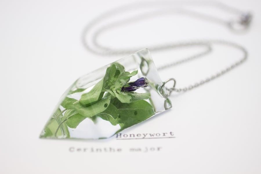 Image of Honeywort (Cerinthe major) - Small #1