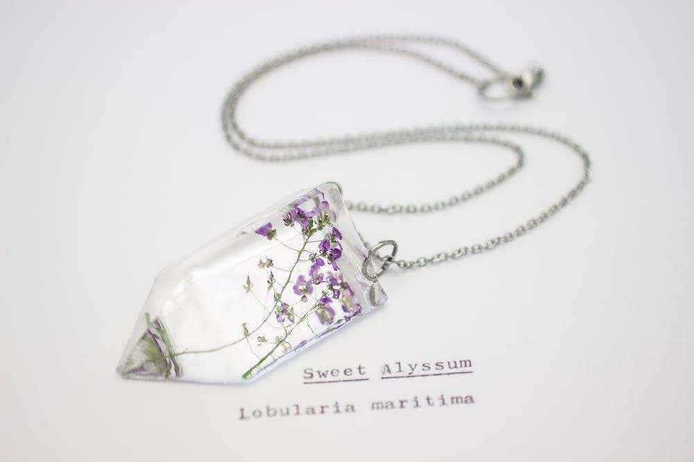 Image of Sweet Alyssum (Lobularia maritima) - Small #1