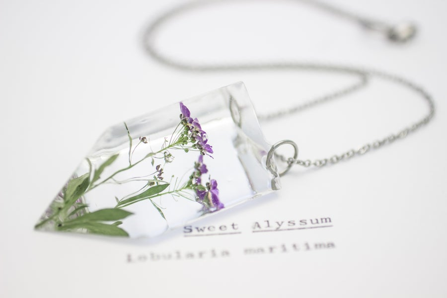 Image of Sweet Alyssum (Lobularia maritima) - Small #2