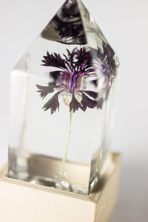 Image of Black Cornflower (Centaurea cyanus) - Floral Light #1