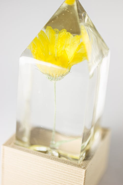 Image of Marigold (Calendula officinalis) - Floral Light #2