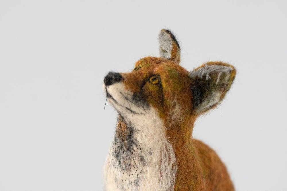 Image of Sitting Fox