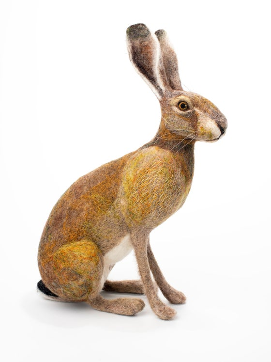 Image of  Sitting Hare
