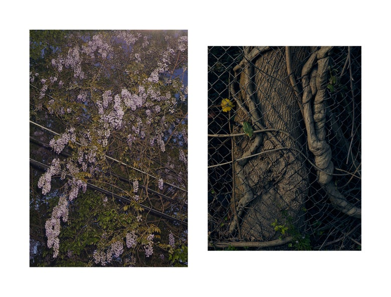 Image of Wisteria Study Diptych