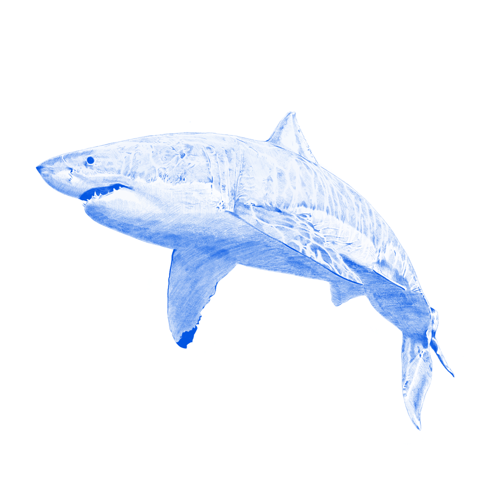 Image of Kyle Hall - The Shark EP - FTC02 - Aquatic Blue