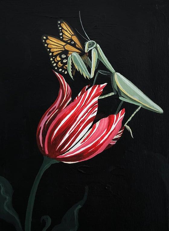 Image of Mantis