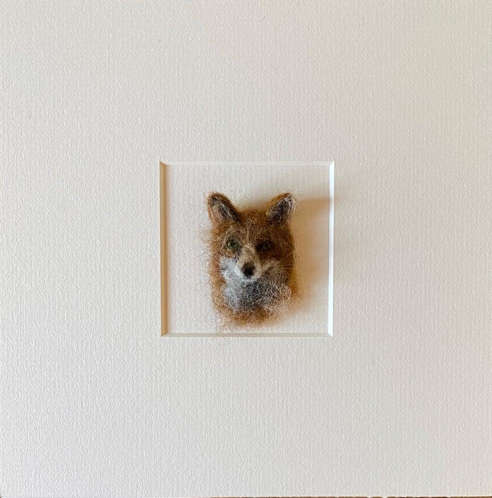 Image of Rufus Fox