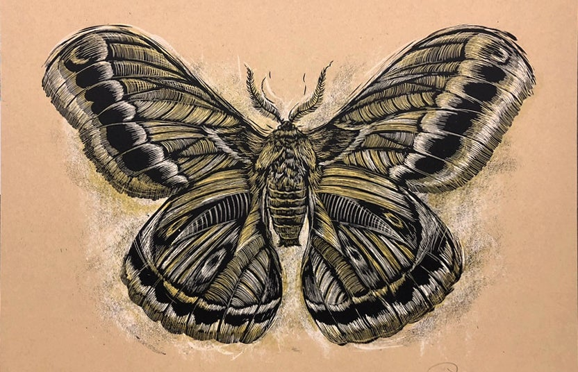 Reconstructed Moth