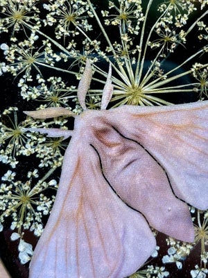 Image of Small Oval Resin Wall Hanging with Preserved Queen Anne's Lace and Paper Silk Moth