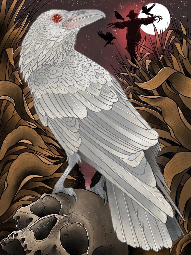 Image of Albino Crow