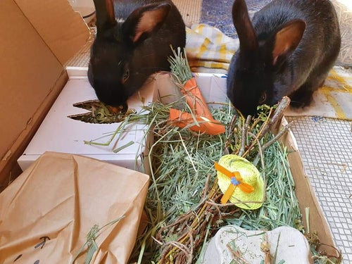 Image of Packaging hay carrots
