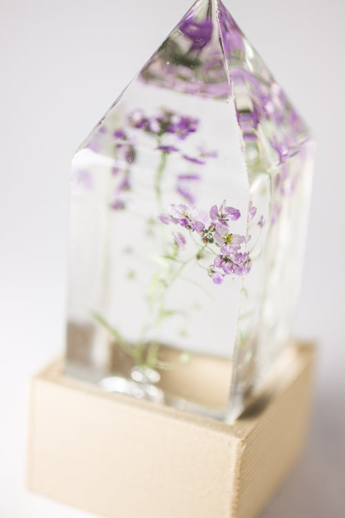 Image of Sweet Alyssum (Lobularia maritima) - Floral Prism Desk Light #2