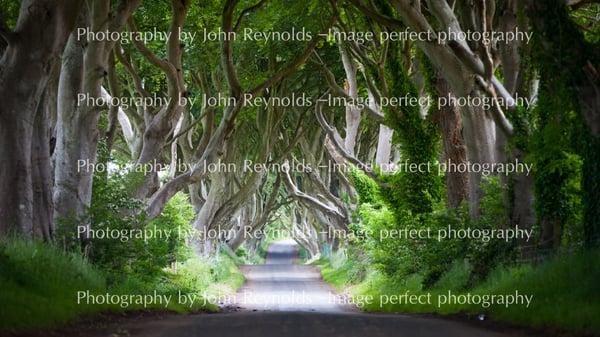 Image of 'Dark Hedges Landscape / Portrait Catalogue no U9730