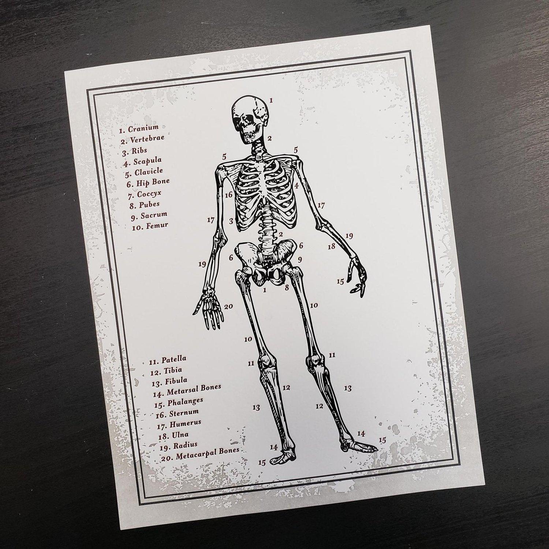 "Skeleton Anatomy Letterpress Print  (8""x10"")"