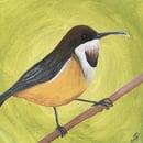 Image 2 of Australian Bird Original Paintings