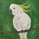 Image 4 of Australian Bird Original Paintings