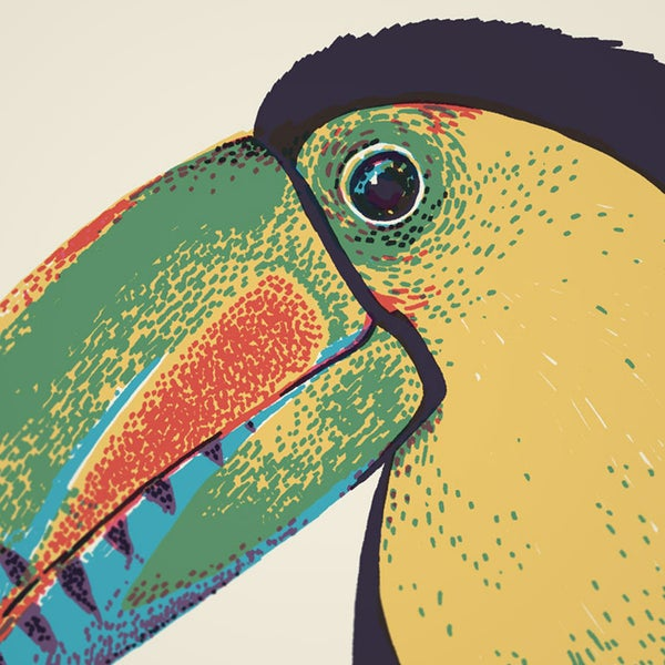 BIRD BEAKS No.1 - Sorry.