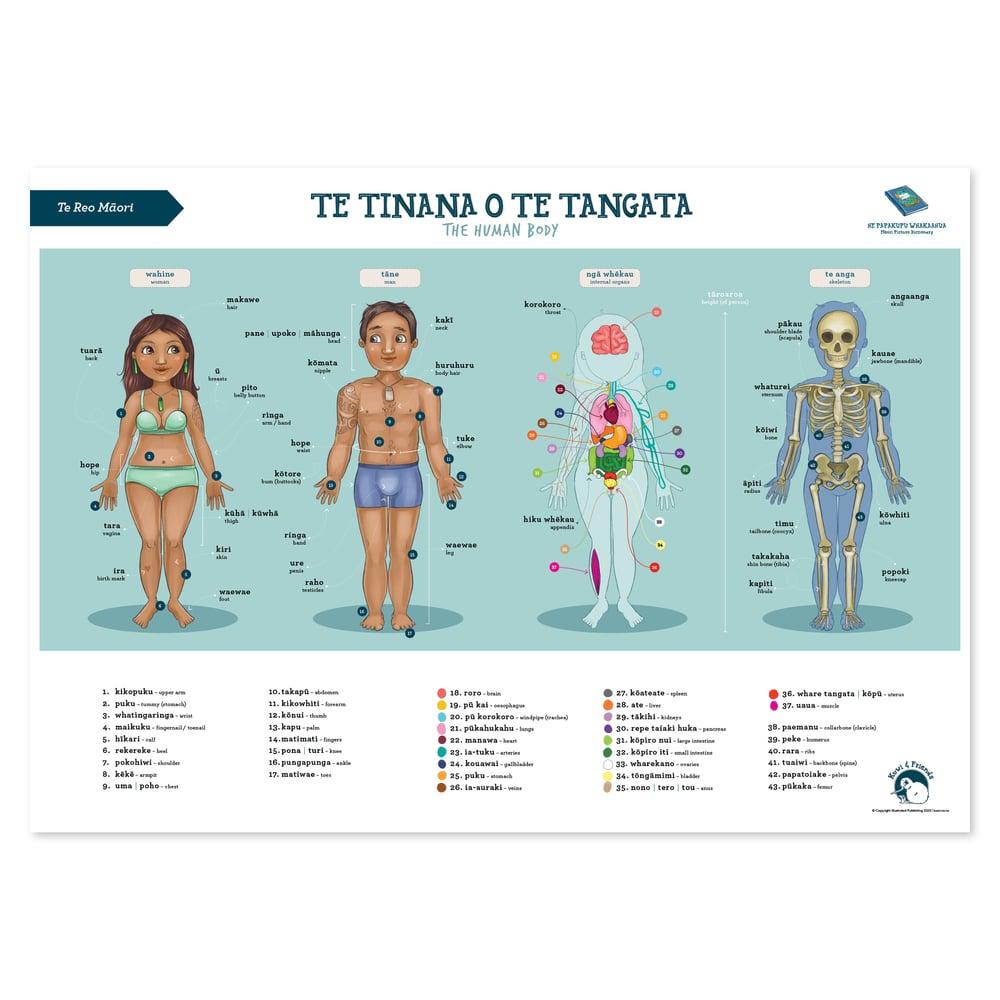 Te Reo Māori - A2 Poster - Human Body