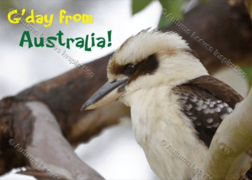Image of B11 G'day from Australia Kookaburra