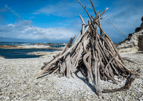Image of N8 Driftwood