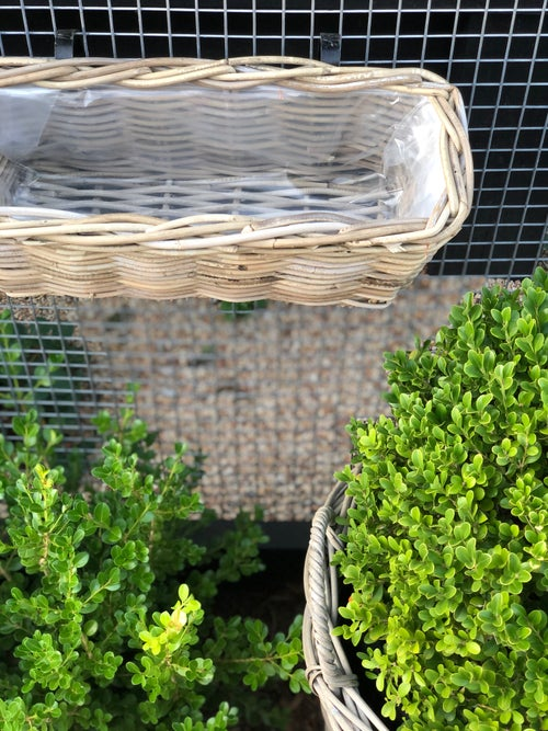 Image of Rattan Balcony Planter