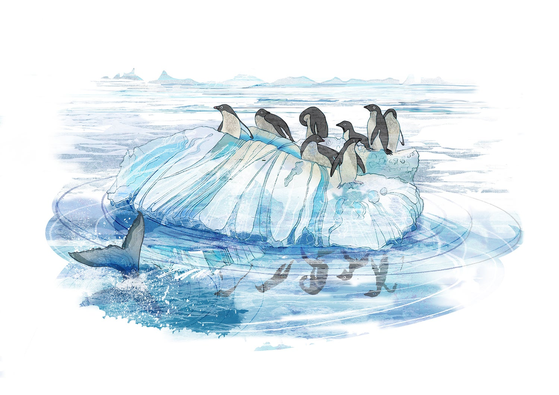 Image of Adélies on Ice