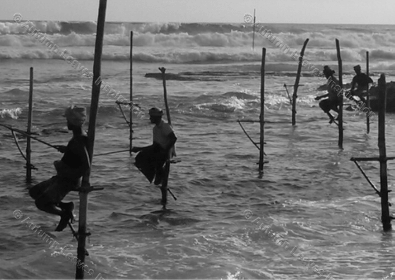Image of T14 Black and white stilt fishermen Sri Lanka