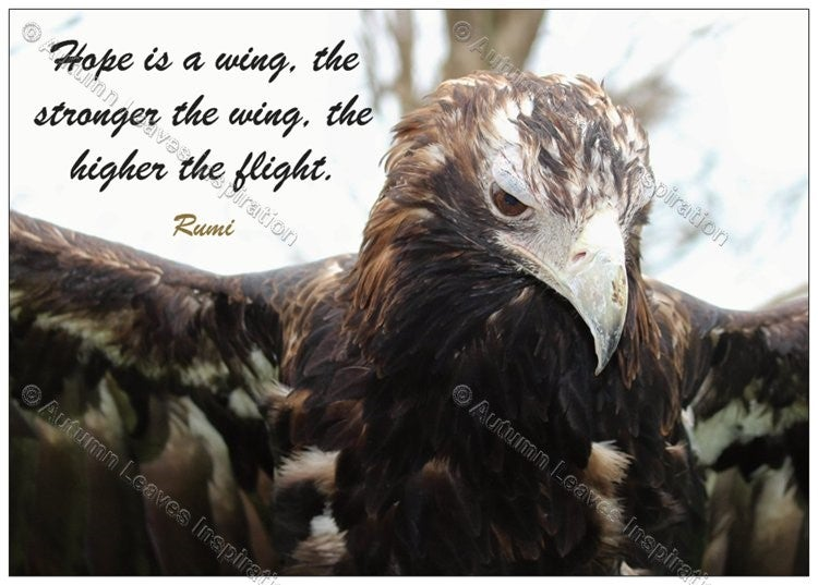 "Image of Q6 Rumi ""Hope is a wing"" quote"