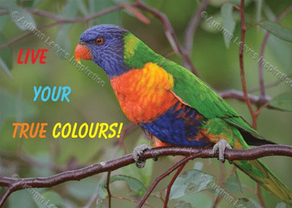 Image of Q14 Live your true colours