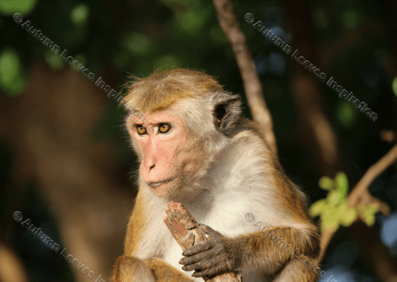 Image of A3 Monkey