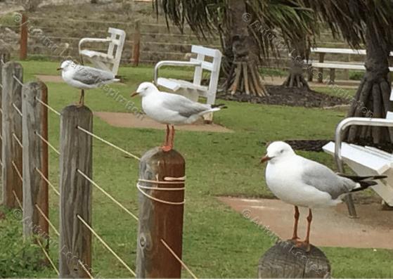 Image of B6 Seagulls