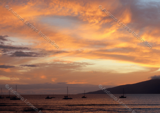 Image of N4 Sunset Maui