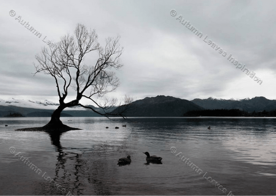 Image of N6 Black and White lake with tree and ducks