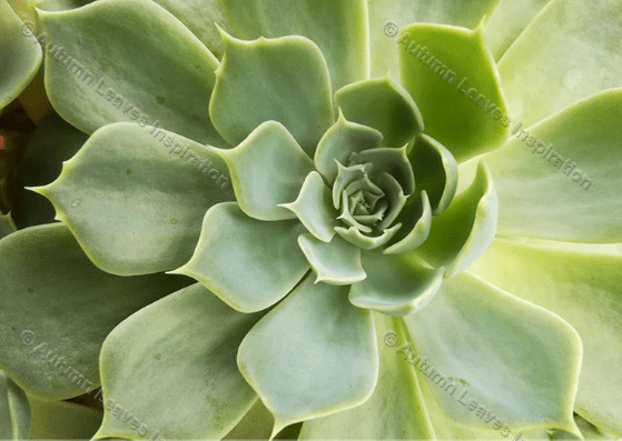 Image of N7 Succulent