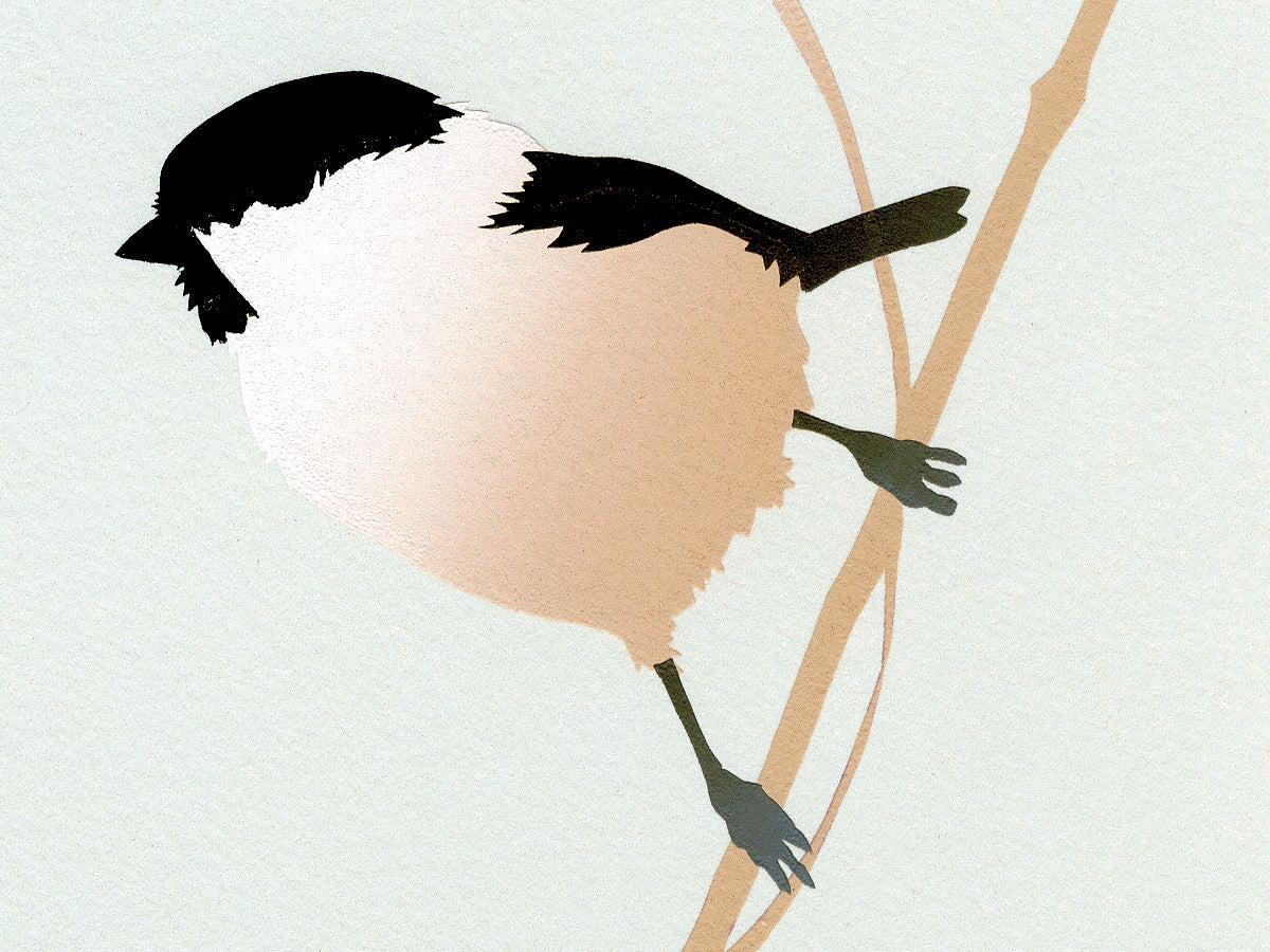 Image of Willow Tit Screen Print